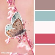 Foto Color Patterns, Wedding Blue, Summer Wedding Colors, Summer Colors, Trendy Wedding, Color Palettes, Colour Pallete, Color Combinations, Butterfly Colors