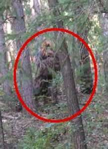 Image Search Results for real bigfoot pictures sasquatch sightings