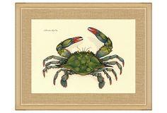 Blue Crab Print on OneKingsLane.com. Reminds me of crabbing with Grandma!