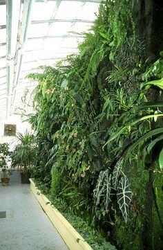 Greenhouse of the Botanical Garden of Toulouse Indoor Outdoor, Indoor Garden, Indoor Plants, Landscape Walls, Landscape Design, Small Gardens, Farm Gardens, Jardin Vertical Artificial, Vertikal Garden