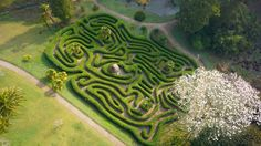 No cheating! A rare chance to view the maze from above thanks to our friends at SkyFly video. It's also the best way to see a magnolia tree in full flower too.