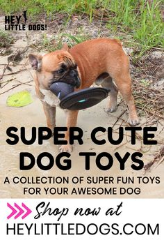 We've got many types of toys to keep your dog occupied & having fun! Our interactive puzzle dog toys are super fun, they come in several parts to keep your dog busy. We also have squeaky dog toys, no stuffing toys & outdoor dog toys in super cute designs like a Ninja Warrior, cute monkeys, mini polar bears & more! We also have stylish dog clothes, t-shirts & hoodies for dogs. #dogtoys #cutedogtoys #interactivedogtoys #puzzledogtoys #dogpuzzles #plushdogtoys #squeakydogtoys… Cute Dog Toys, Small Dog Toys, Cute Dog Clothes, Best Dog Toys, Best Dogs, Small Dogs, Outdoor Dog Toys, Outdoor Play, Indoor Outdoor