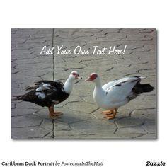 Caribbean Duck Portrait Postcard