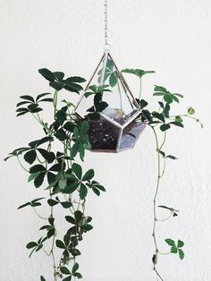 DECORATING IDEAS: Des plantes suspendues pour décorer