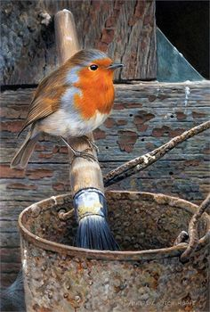 Robin by Andrew Hutchinson All Birds, Cute Birds, Little Birds, Bird Drawings, Animal Drawings, Robin Redbreast, Robin Bird, Tier Fotos, Bird Pictures