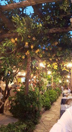 GORGEOUS lemon grove at our favorite restaurant in Praiano European Honeymoon Destinations, Italy Honeymoon, Best Honeymoon, Italian Garden, Italian Summer, Places To Travel, Places To Go, European Honeymoons, Ibiza