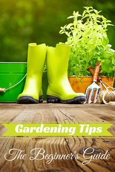 A guide for the beginners who want to start gardening and keep in mind some step-by-step gardening activities to see their garden flourish. Read few tips to get started.