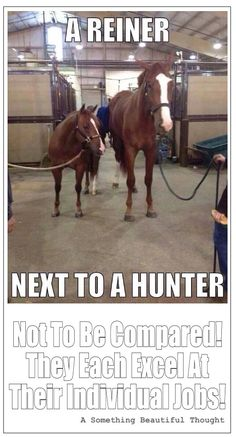 A Reiner Standing Next To A Hunter - They are not to be compared, they each excel at their individual jobs! #reiner_horse, #reining_horses, #hunter_horse, #hunter_jumper