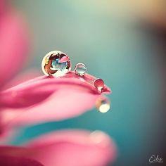 (via macro photography. | Macro & Bokeh Photography | Pinterest)
