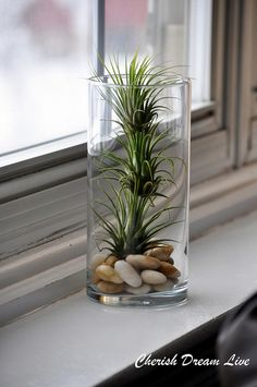 Air plant in a glass vase
