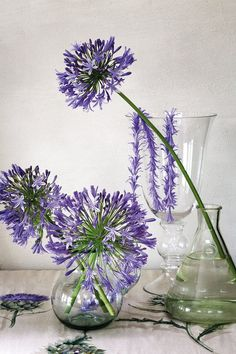 Arrange agapanthus flowers in glass containers and group them together, or create an indigenous 'daisy' chain by stringing single florets onto fishing line. Place the containers on a striking piece of fabric.
