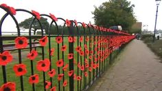 More than poppies are knitted or crocheted and attached to railings in a Hampshire town for Remembrance Sunday. Knitted Poppies, Poppy Wreath, Remembrance Day Poppy, Poppy Craft, Pom Pom Tree, Armistice Day, Anzac Day, Yarn Bombing, Land Art