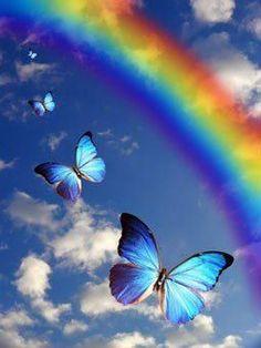 blue butterfly rainbow