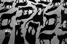 Alexey Bednij is a 28-year-old photographer who manipulates photos of people and animals in oder to make these unique shadow portraits that he refers to as 'collages'. He is based in Russia.