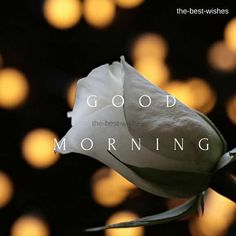 37 Good Morning Greetings Pictures And Wishes With Beautiful Images – FunZumo Good Morning Beautiful Gif, Good Morning Roses, Good Morning Texts, Good Morning Picture, Good Morning Messages, Good Morning Good Night, Morning Pictures, Morning Wish, Morning Quotes