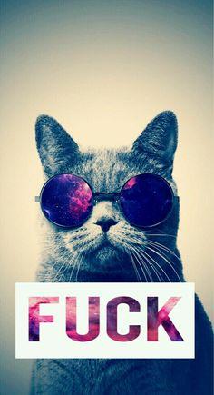 #Funk. #wallpers #hipster #cat