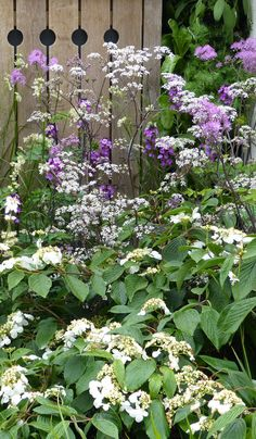 Cow parsley - top garden and plant trends from the Chelsea Flower Show 2015
