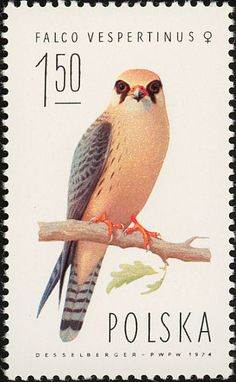 Red-footed Falcon stamps - mainly images - gallery format