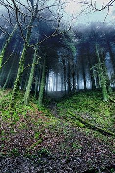 Sedna 90377 Macclesfield Forest by Mark Rickaby Dragons Edge, Disney Films, Dog Walking, Mists, Paths, Woodland, Beautiful Pictures, Country Roads, In This Moment