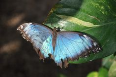 Butterfly House - Vienna Butterfly House, Vienna, Moth, Insects, My Photos, Animals, Animales, Animaux, Animal