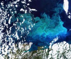 Cette image immortalise un gigantesque banc de plancton plus grand que la Grèce qui s'étend à travers la mer de Barents, au large de la pointe nord de l'Europe.