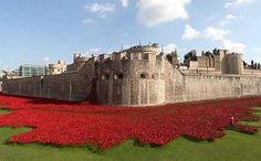 La tour de Londres et ses coquelicots pour souligner le 11 novembre 2014