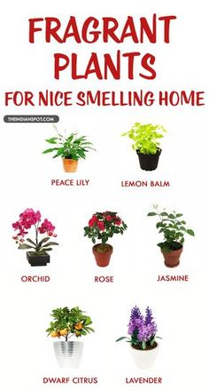 FRAGRANT HOUSEPLANTS FOR A NICE SMELLING HOME. Bedroom PlantsTo ...