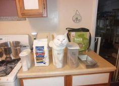 A macskák különös logikája – vicces macskás képek