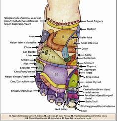 Shiatsu reflexology map for top of foot - What is Reflexology? What Are the Meridians and How Do You Use Them? Hand and foot reflexology massage is probably one of the easiest methods of self healing. There are many reflexology meridian po… Reflexology Massage, Reflexology Points, Foot Reflexology Chart, Foot Massage, Lymph Massage, Acupuncture Points, Massage Techniques, Natural Health Remedies, Alternative Health