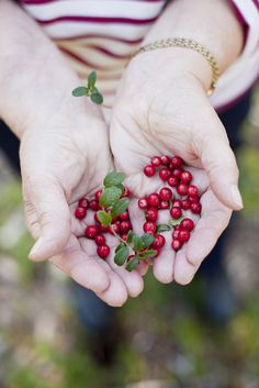Lingon My Photos, Berries, Blessed, Blessings, Pretty, Hands, Autumn, Inspiration, Wallpaper