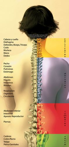 Shiatsu Massage – A Worldwide Popular Acupressure Treatment - Acupuncture Hut Motivation Yoga, Medicine Notes, Medical Anatomy, Anatomy And Physiology, Chinese Medicine, Massage Therapy, Physical Therapy, Human Body, Reiki