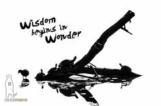 Abstract, Quotes, Home Decor, Graphic, Art Print, Turtles, Nature Art Print, Inspirational Quotes, Black and White, Wisdom Begins in Wonder by Bear8Photo on Etsy