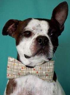 Retro Inspired Dog Bow-tie. $12.25, via Etsy.