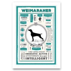 This stylish dog breed infographic print contains some great facts for a Weimaraner Lover. The facts illustrated are:  Breed Group, Breed Founded, Country of Origin, Size, Colours, Coat, Lifespan, Temperament and Personality.  The facts are derived from the UK Kennel Club, where applicable.  It is printed on Epson Archival Matte Paper A4 (21cm x 29.7cm) paper for a durable, clear and long lasting print. The print fits into an A4 Frame. These frames are available off the shelf, from all major…