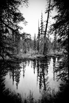 Trees on riverbank. Glacier NP