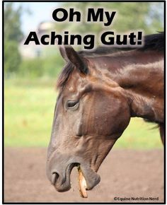 Alternative Options for Stomach Ulcer Treatment & Prevention in Horses Horses And Dogs, Animals And Pets, Farm Animals, Horse Care Tips, Stomach Ulcers, Horse Training Tips, Horse Grooming, Beautiful Horses, Horse Stuff