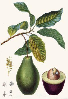 ingredients on pinterest avocado teas and green teas. Black Bedroom Furniture Sets. Home Design Ideas