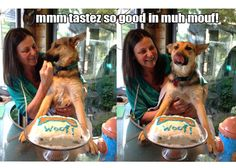 Allie... loves the organic doggy cake!