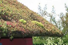 Sedumdak in de Tuinen van Appeltern Sedum Roof, Living Roofs, Sustainable Living, Ecology, Sustainability, Eco Friendly, Outdoor Decor, City Gardens, Green Roofs