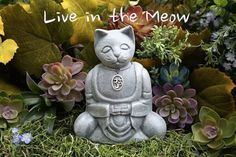 I have lived with several Zen masters, all of them cats. EckharTolle