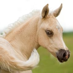 Just Foals On Pinterest Baby Horses Palomino And Long Legs