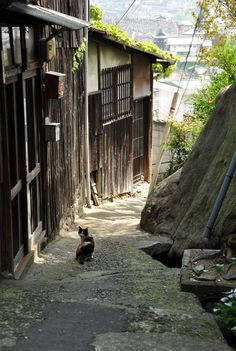 Cat in Japan. Japanese Landscape, Japanese Architecture, Beautiful World, Beautiful Places, The Cat Returns, Japan Street, Aesthetic Japan, Cat Aesthetic, Japanese Streets
