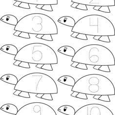 Count Turtle Math