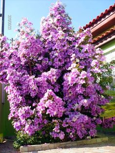 arvores floridas para jardim - Pesquisa Google
