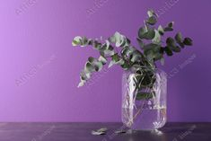 Beautiful eucalyptus branches in glass vase on table against purple background. Space for text. Buy Creativity & Imagination. Take a look at what the world's best photographers have to offer at africa-images.com Eucalyptus Branches, Purple Backgrounds, Best Photographers, Photo Library, Imagination, Glass Vase, Creativity, Africa, Stock Photos