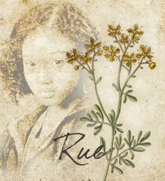 Rue, strongly scented shrubs, help with eyesight. Did rue in the Hunger Games help Katniss see better?