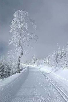 Gorgeous winter scene