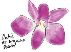 Drawing of an orchid for Day 7 of 30 Days of Creativity. Woo! 7 for 7. #30DoC @createstuff