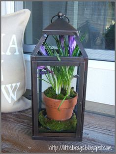 Little Brags: A Little Spring Fever, great idea for my lanterns with broken glass, put a plant inside.