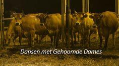 Dansen met Gehoornde Dames -  trailer. Boer van de @Remekerkaas. Een indringend portret van een boerenstel dat het verschil maakt in een wereld die overgenomen is door geld, regels en procedures.
